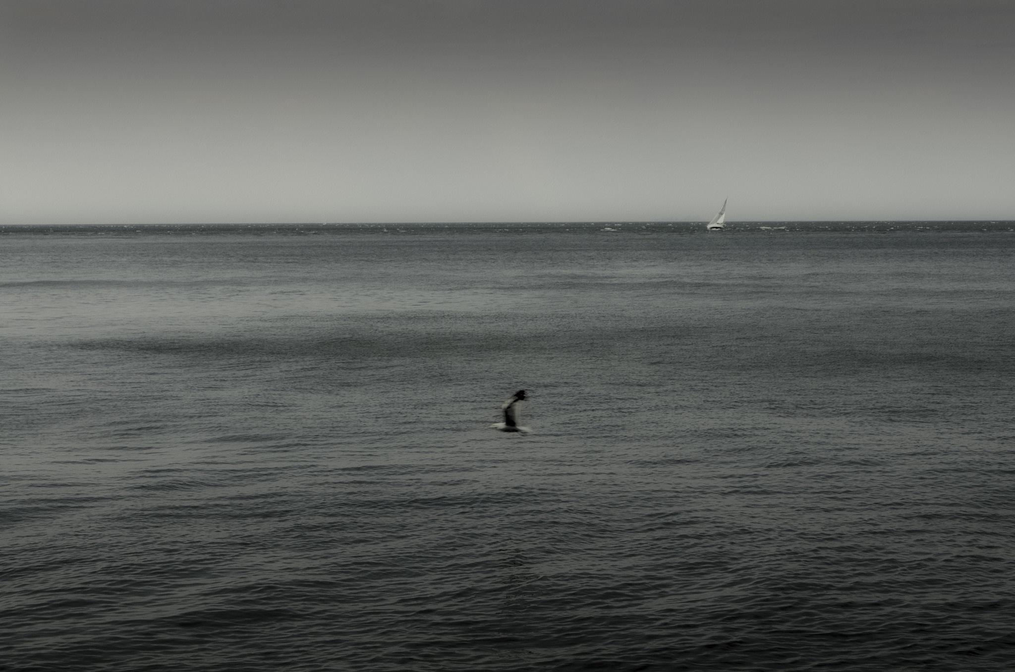 A Seagull's Dream by Graham McArthur