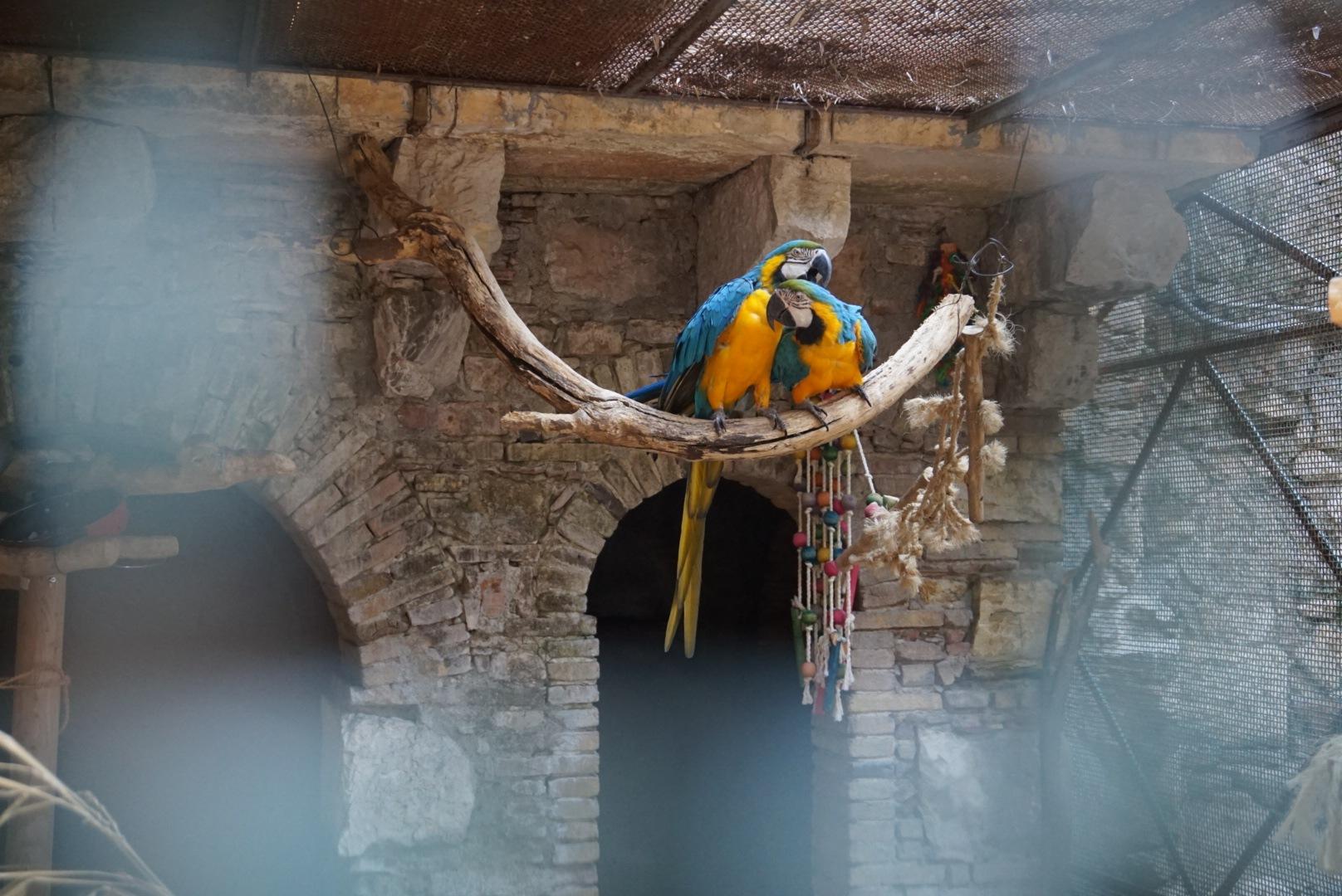 Parrots in love in Sicily by Satu Ylikoski