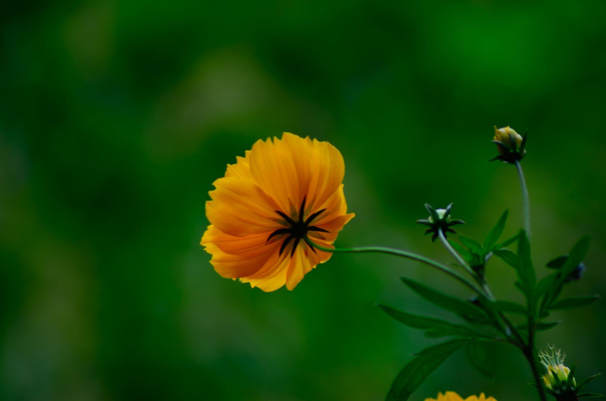 true Detail of a flower.. by Neeraj Roy