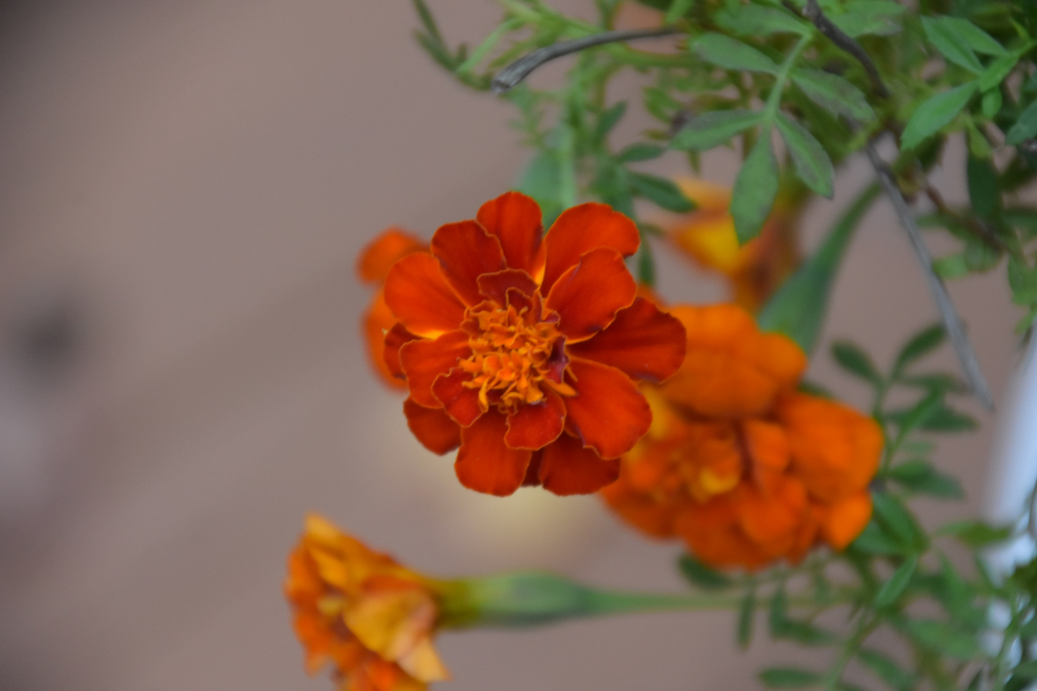 Autumn Blooms on Our Porch 2 by Greg Knott