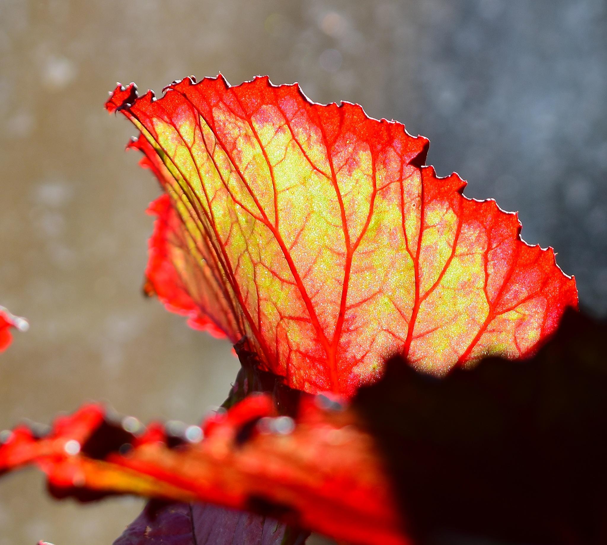 Veins by Greg Knott