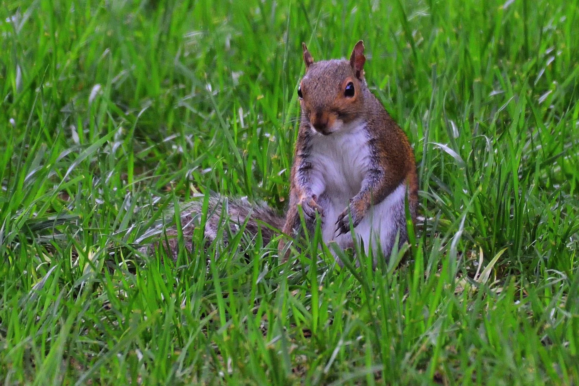 Young Squirrel by Greg Knott