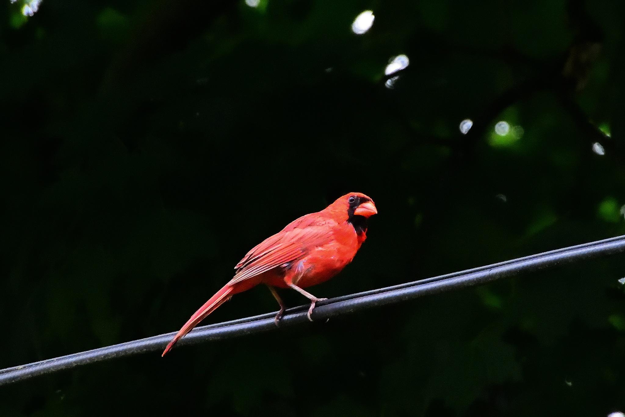 Bird on a Wire by Greg Knott