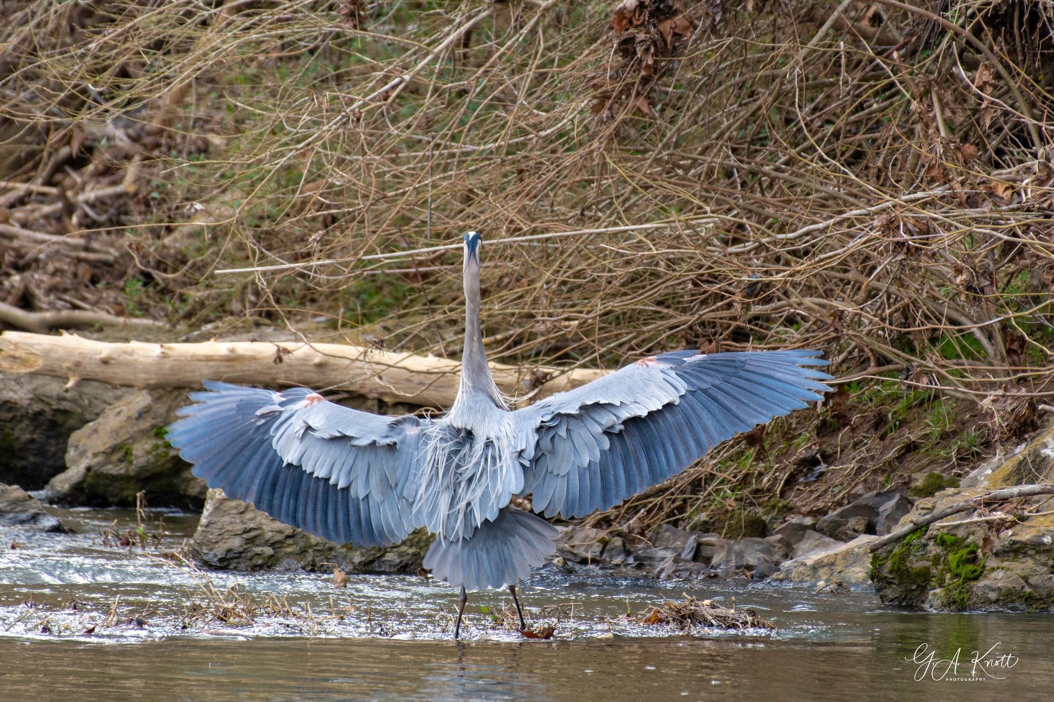 Landing by Greg Knott
