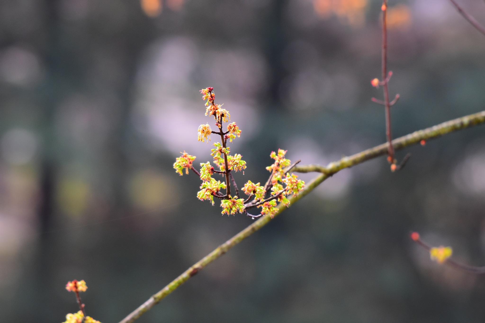 Blooms by Greg Knott