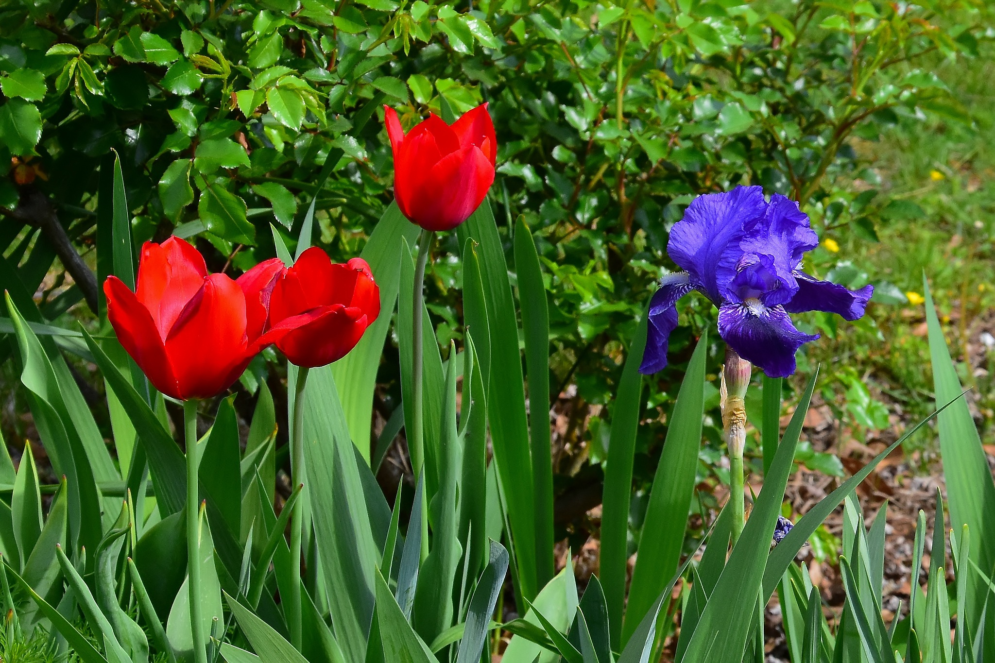 Spring Blooms 3 by Greg Knott