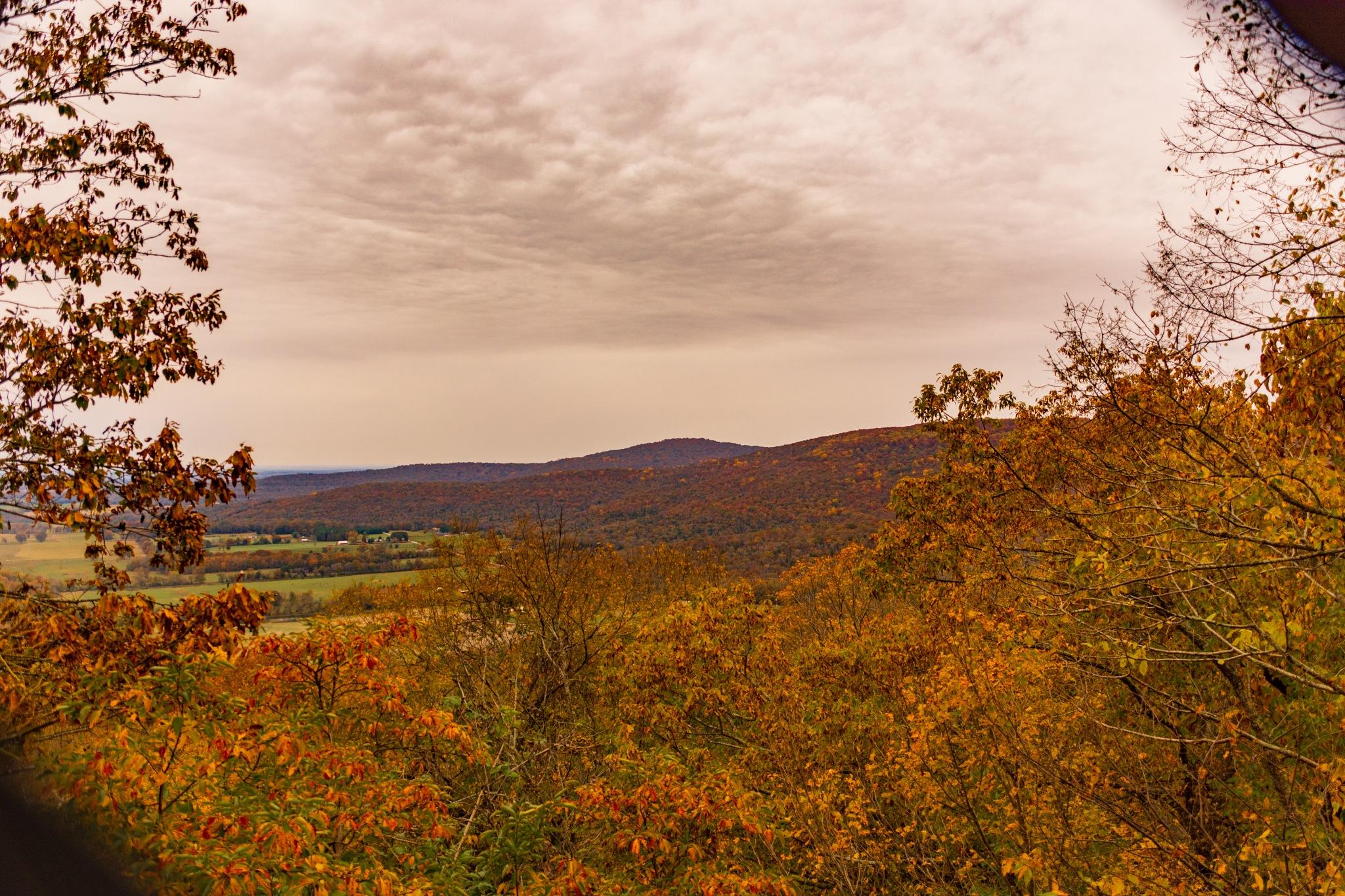 Autumn View by Greg Knott