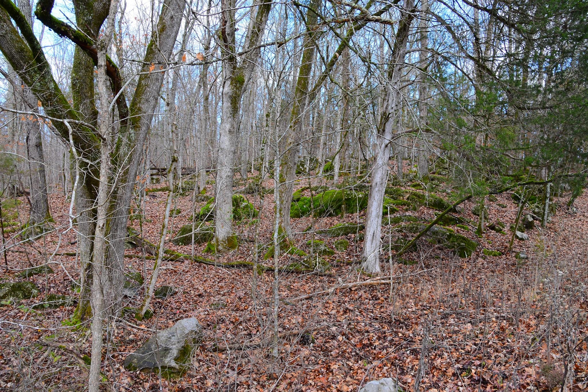 Mossy Rocks by Greg Knott