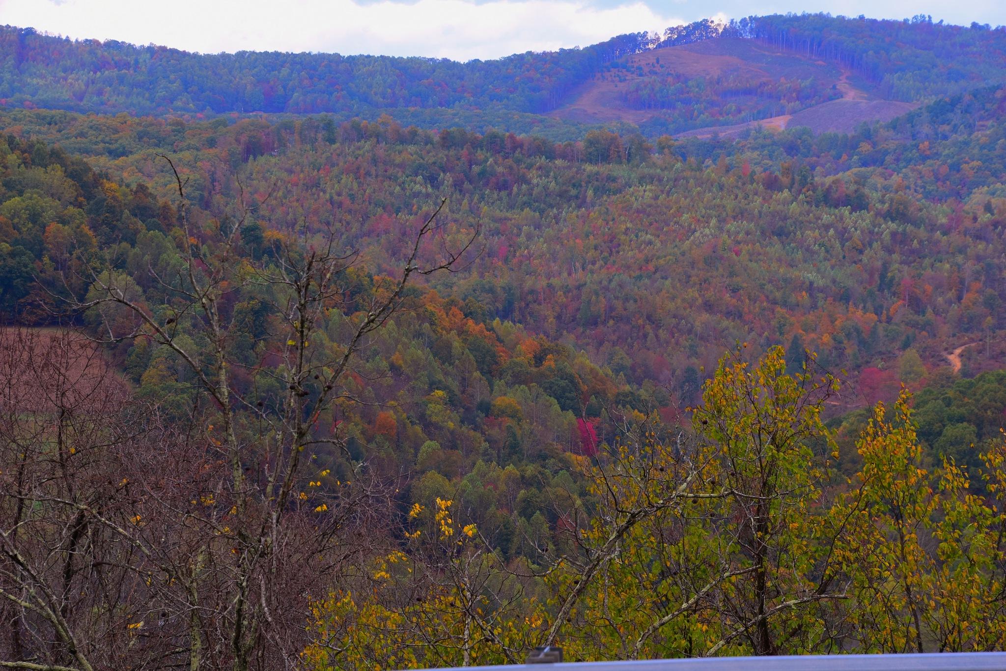 Autumn Colors 6 by Greg Knott