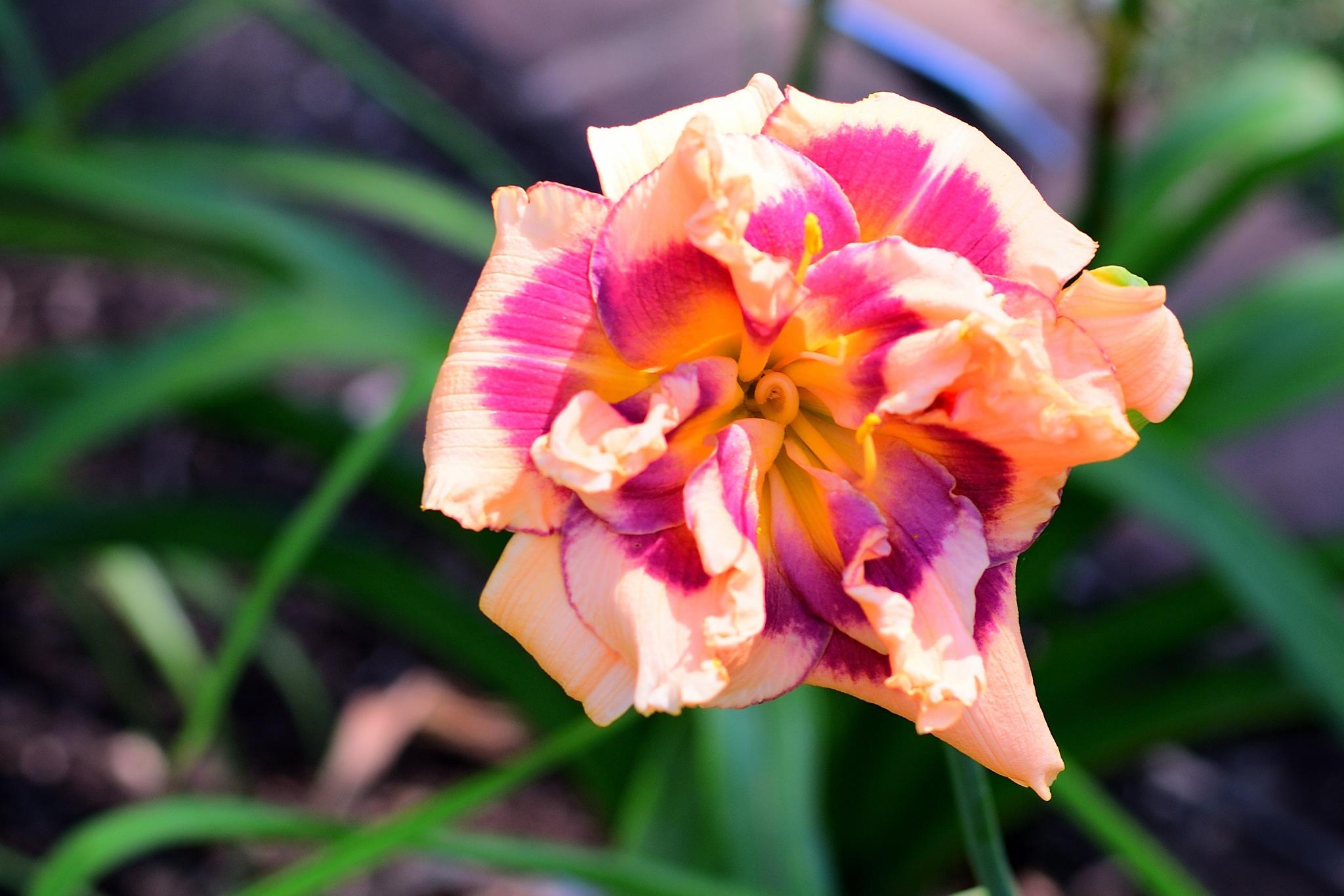 Missouri Botanical Gardens #4 by Greg Knott