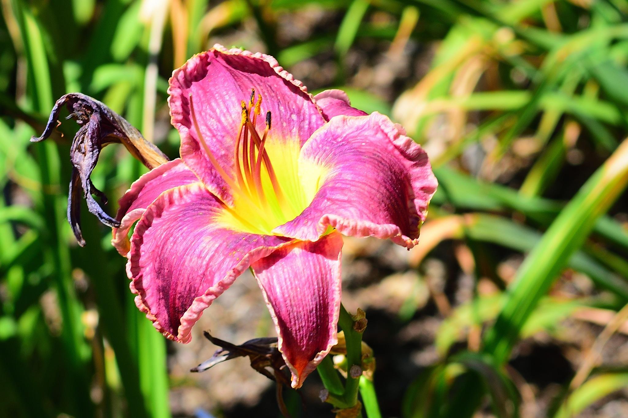 Missouri Botanical Gardens #10 by Greg Knott