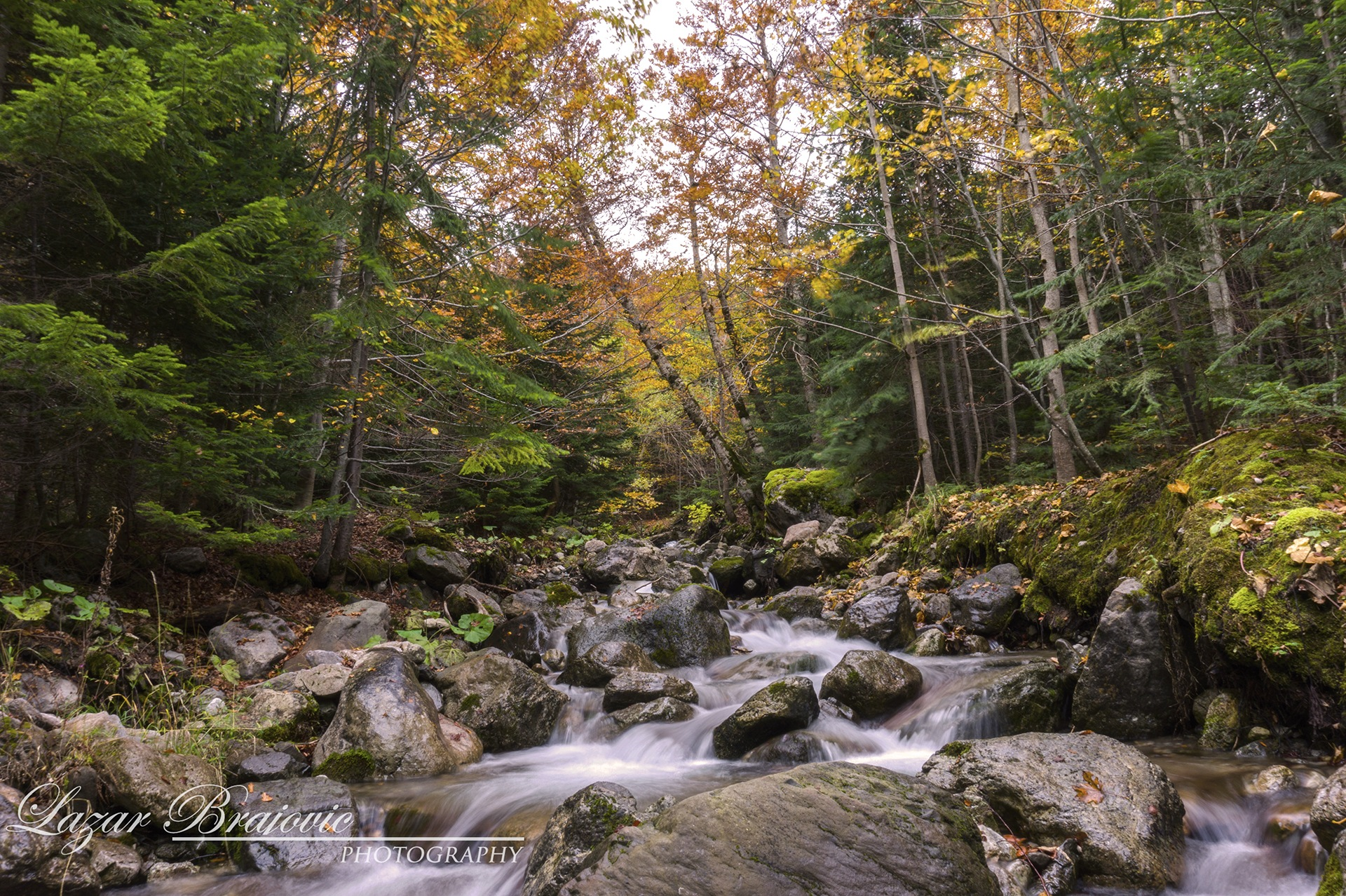 The voice of the forest by Broyson
