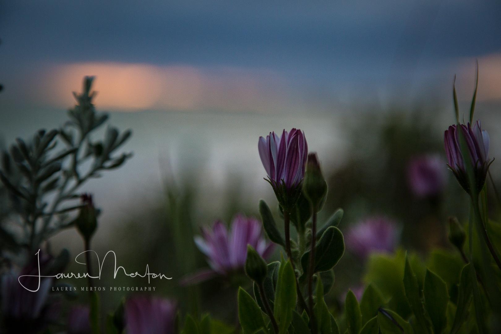 dark flowers by the sea by Laurenmerton