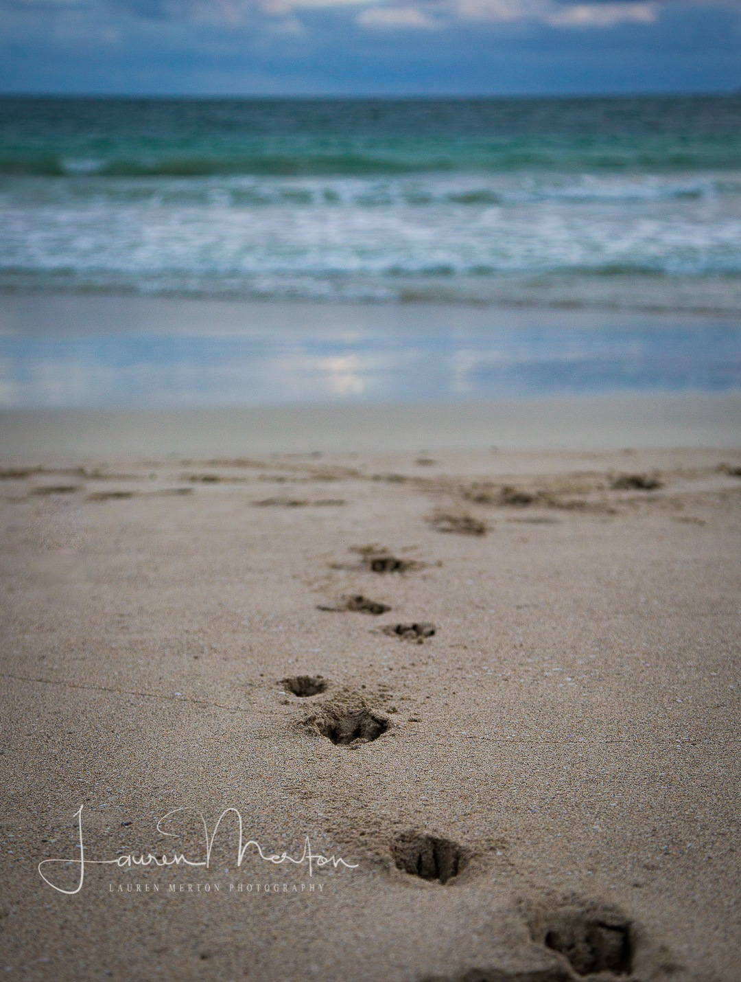 dog prints down to the water by Laurenmerton