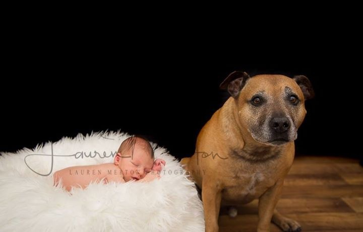 Baby and dog  by Laurenmerton