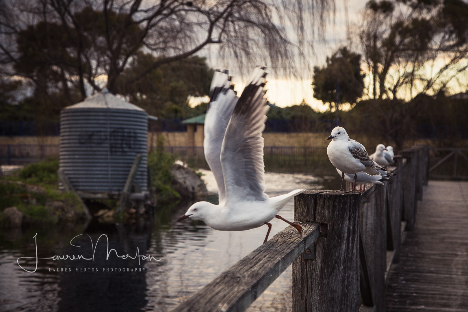 take off by Laurenmerton