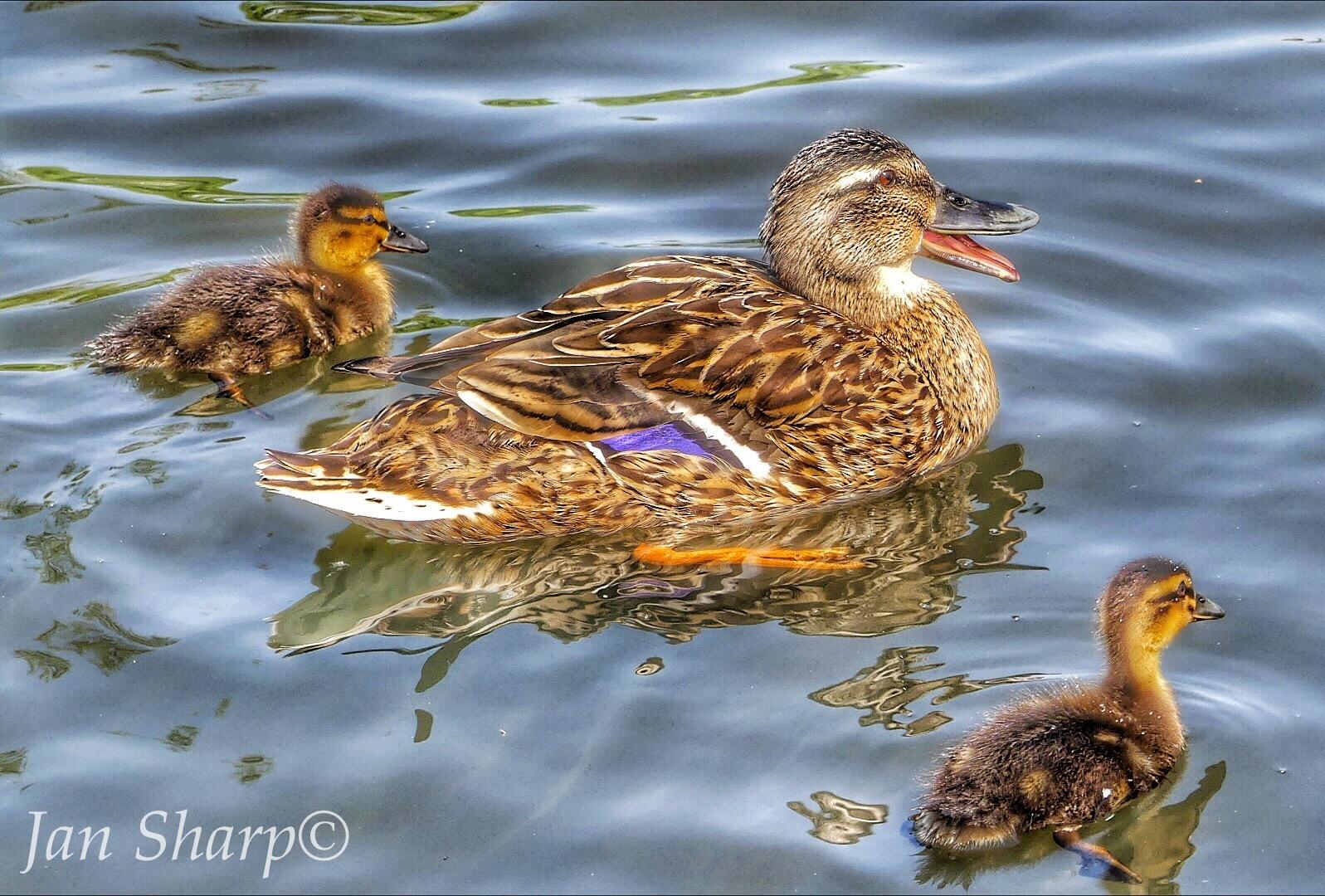 Mother pride.. by JanSharp