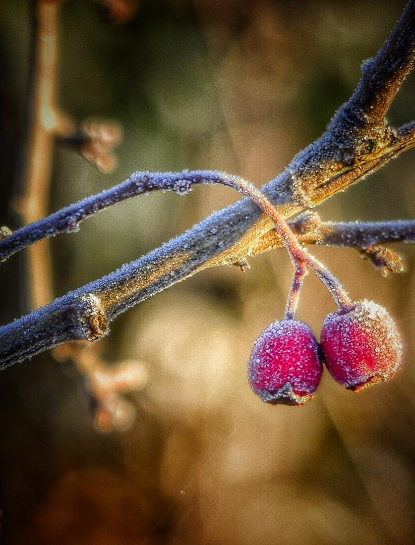 Red Jewels... by JanSharp