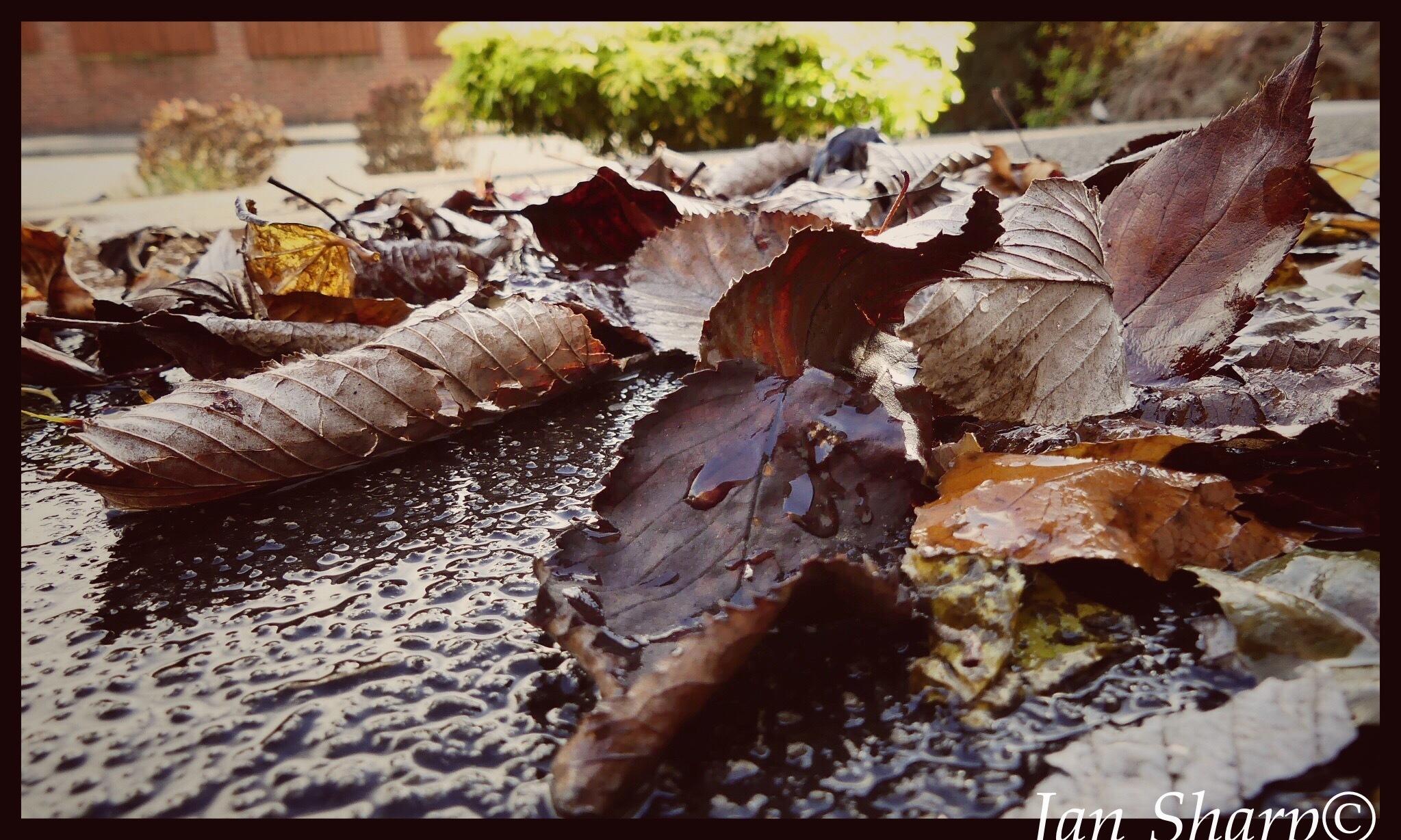 Autumn Colours.. by JanSharp