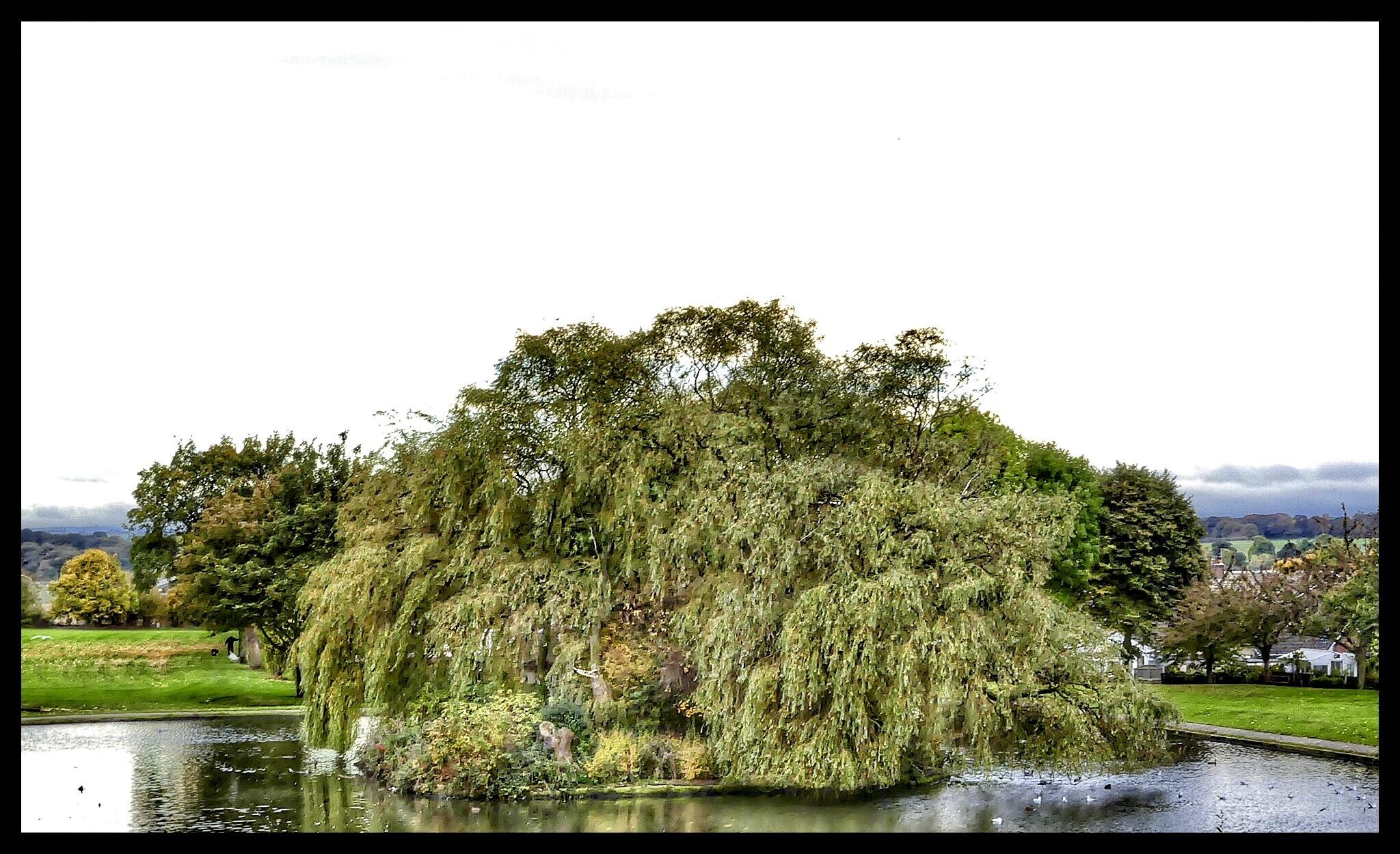 Purston Park Lake and Island.. by JanSharp