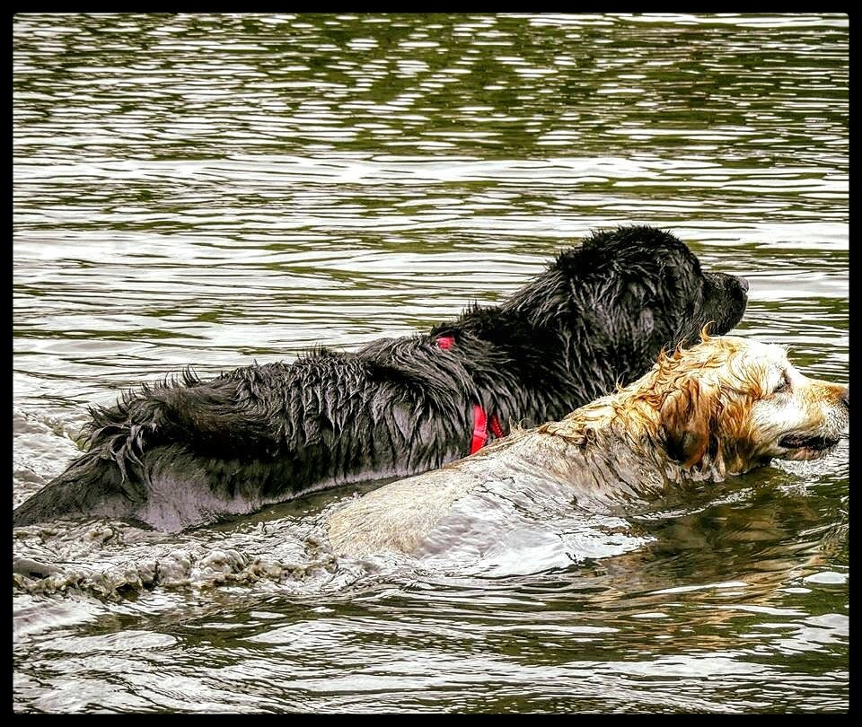 Playing bout in the Water.. by JanSharp