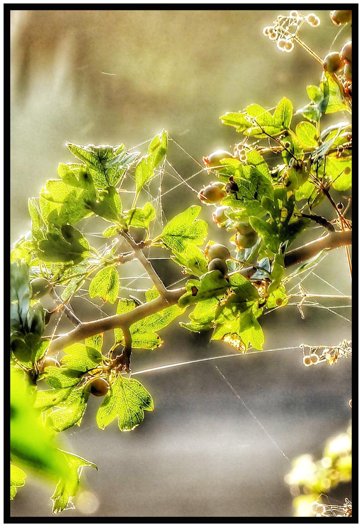 Sun and Silk .. by JanSharp