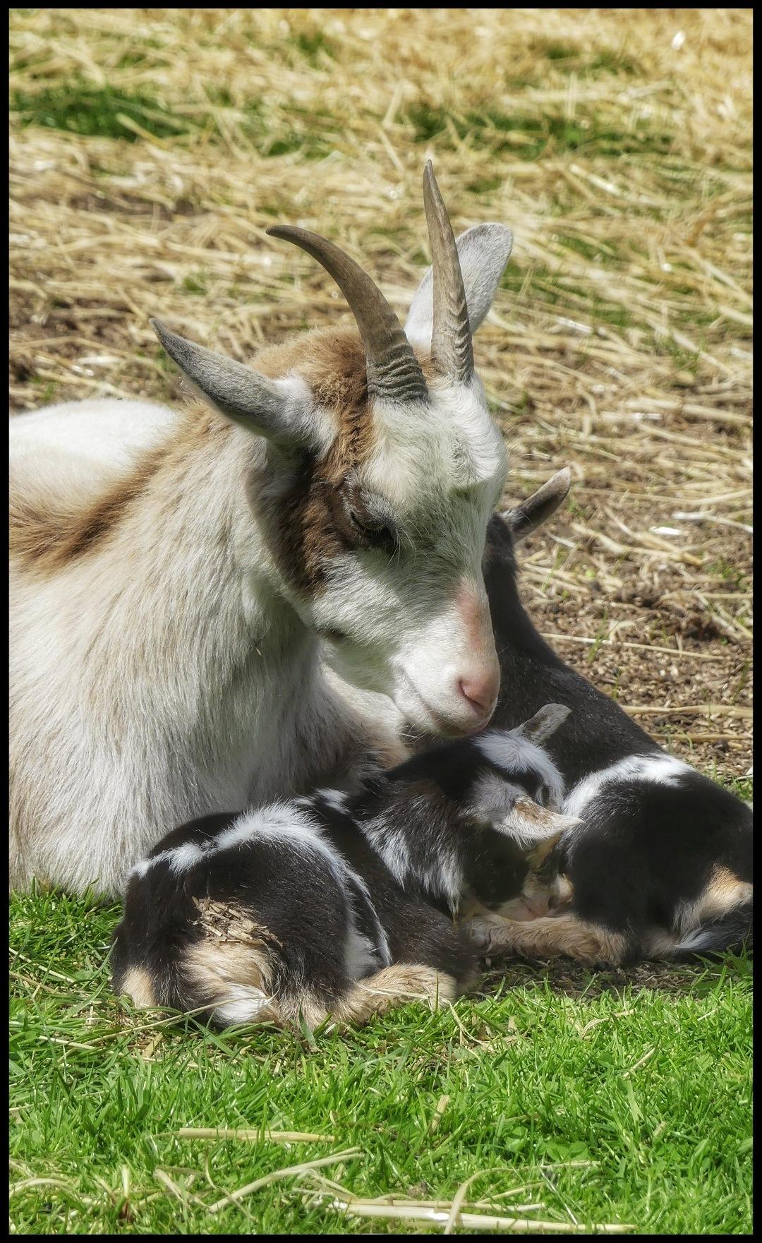 Mum and Kids.. by JanSharp