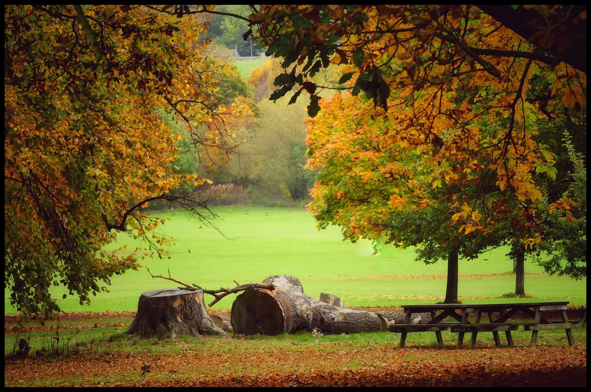 Canon Hall Park. by JanSharp