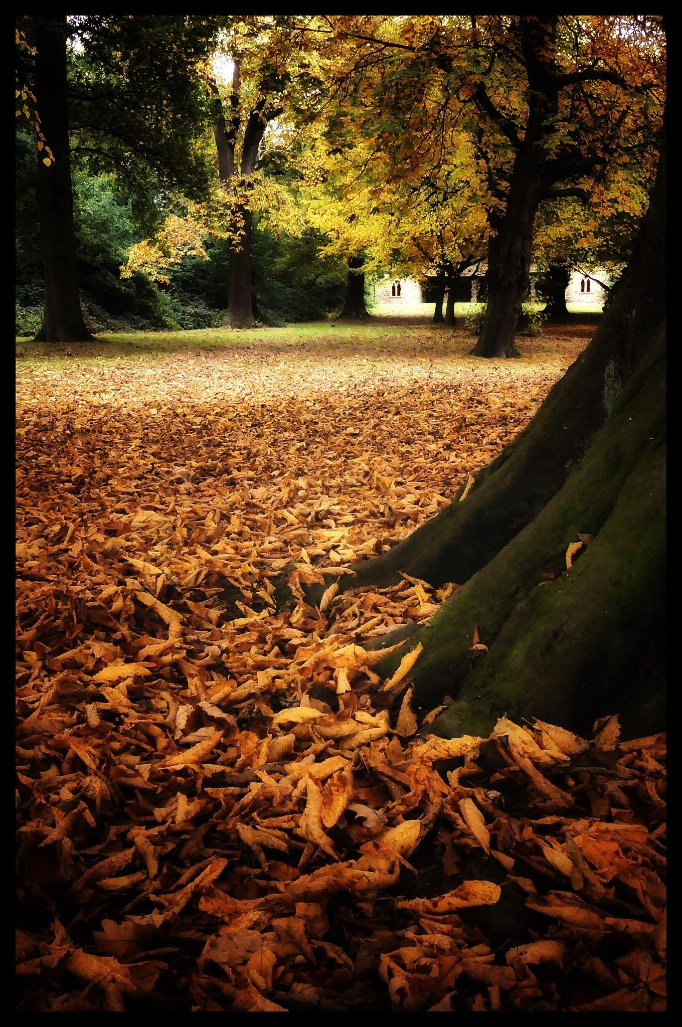 Autumn Colours by JanSharp