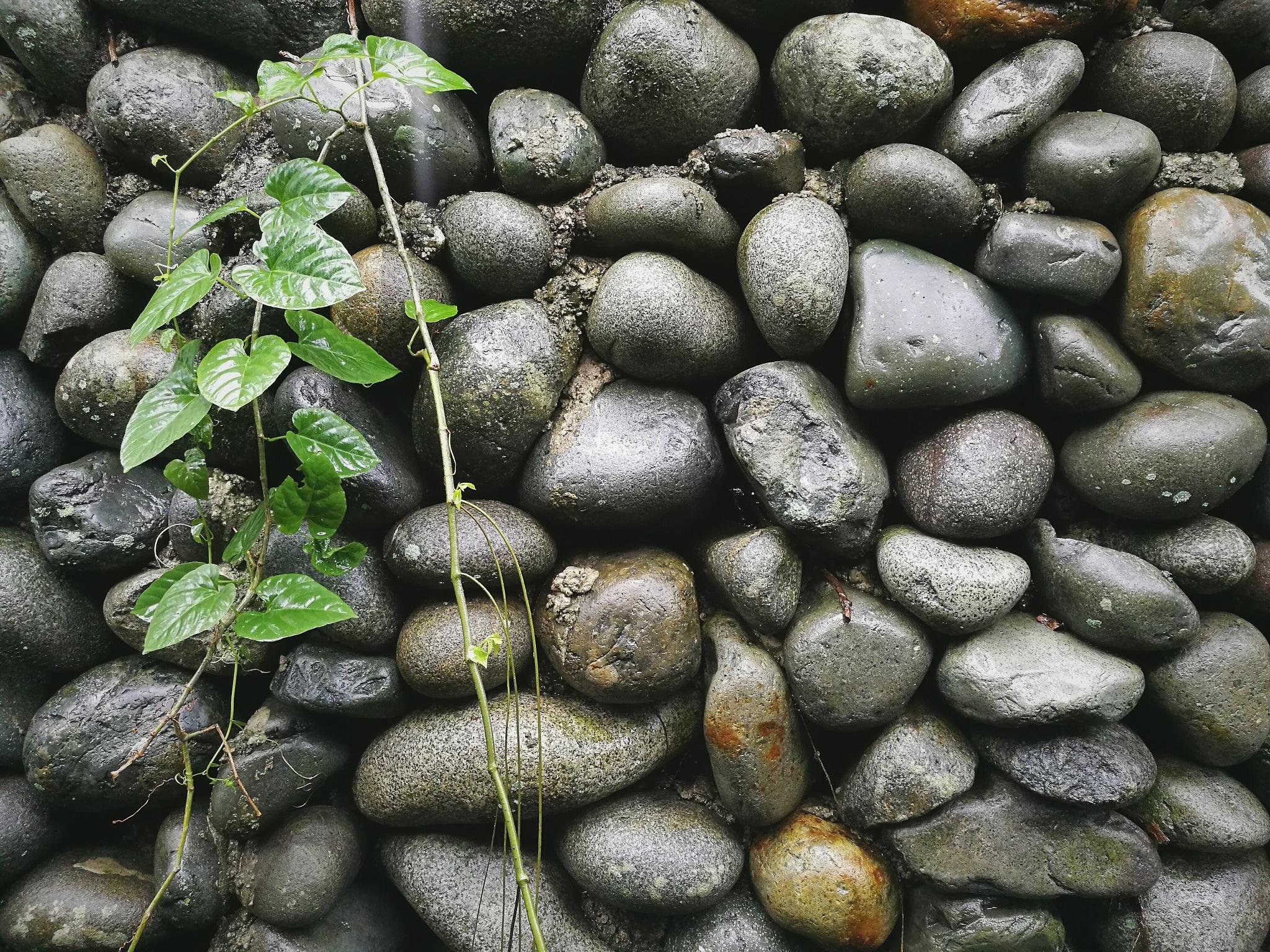 Stoned by Nicolo Nimor