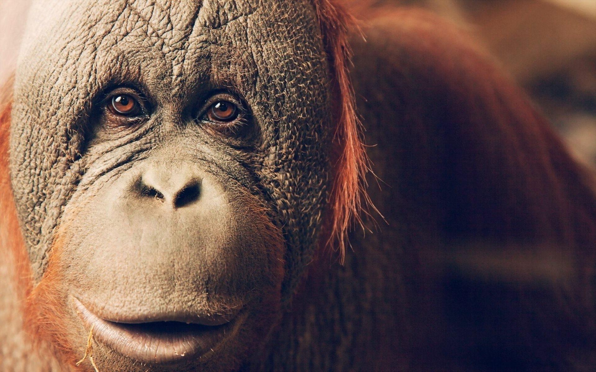 Chimpance by gabrielmarchan