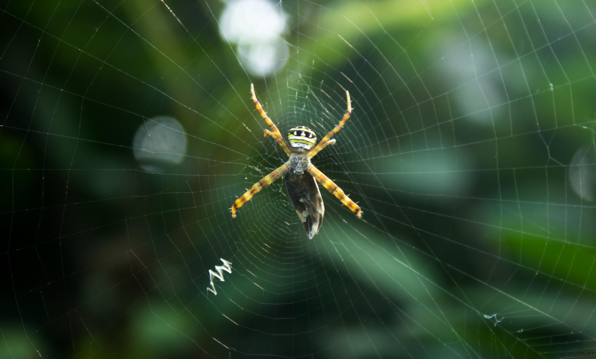 lonely spider   by Abdullah Al Adnan