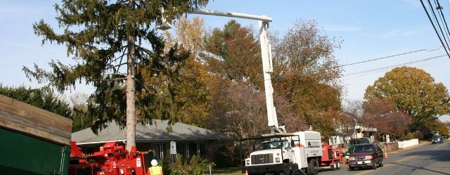 Edgewater Maryland tree removal by treeremovaltoday