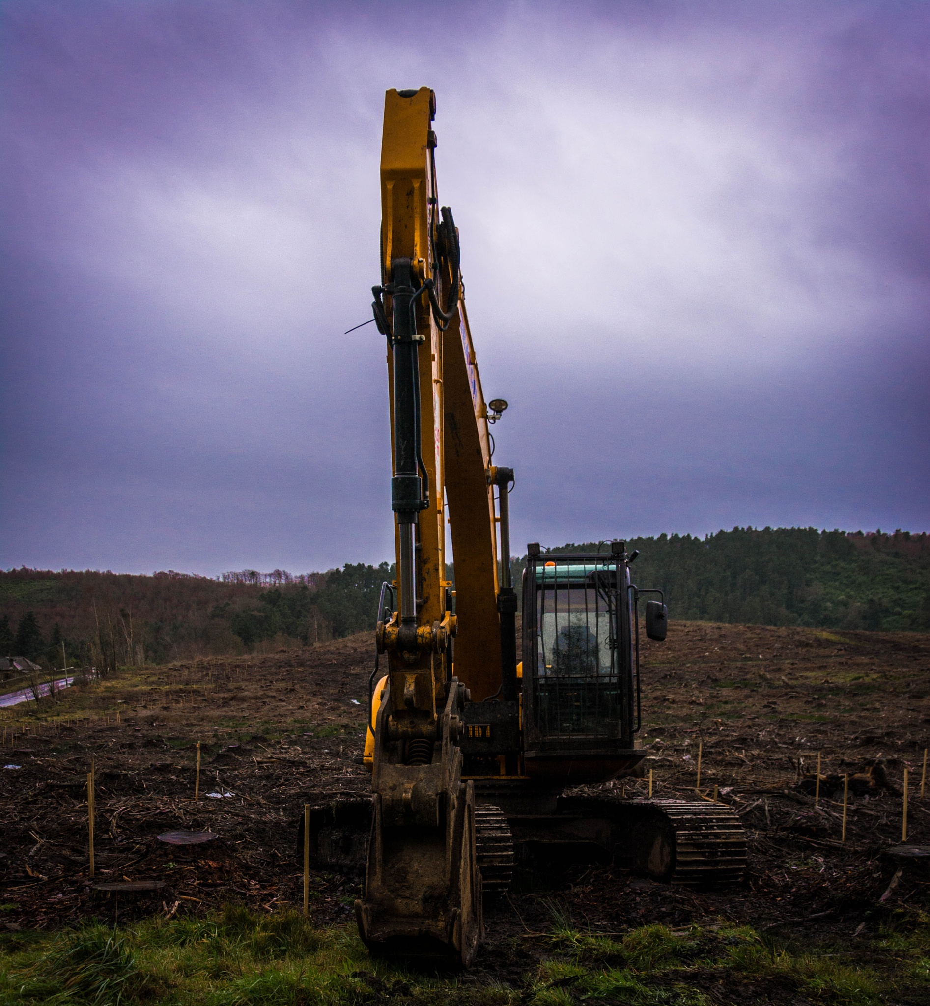 Planting a new forest by Robert Nixon