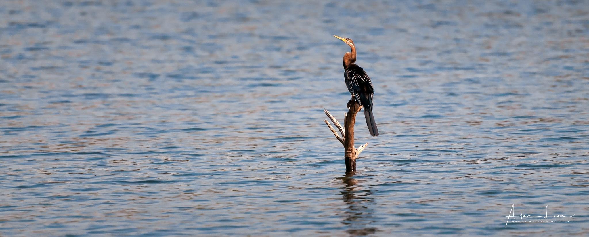 Birding On Lake Kariba 1 by Alec Lux