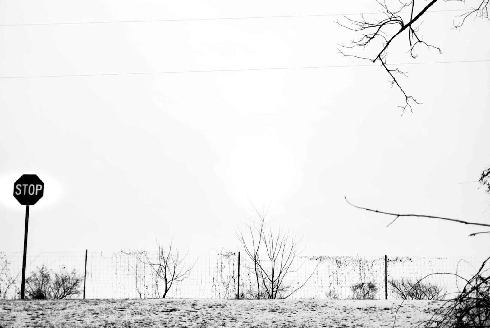 Winter White by aletifer