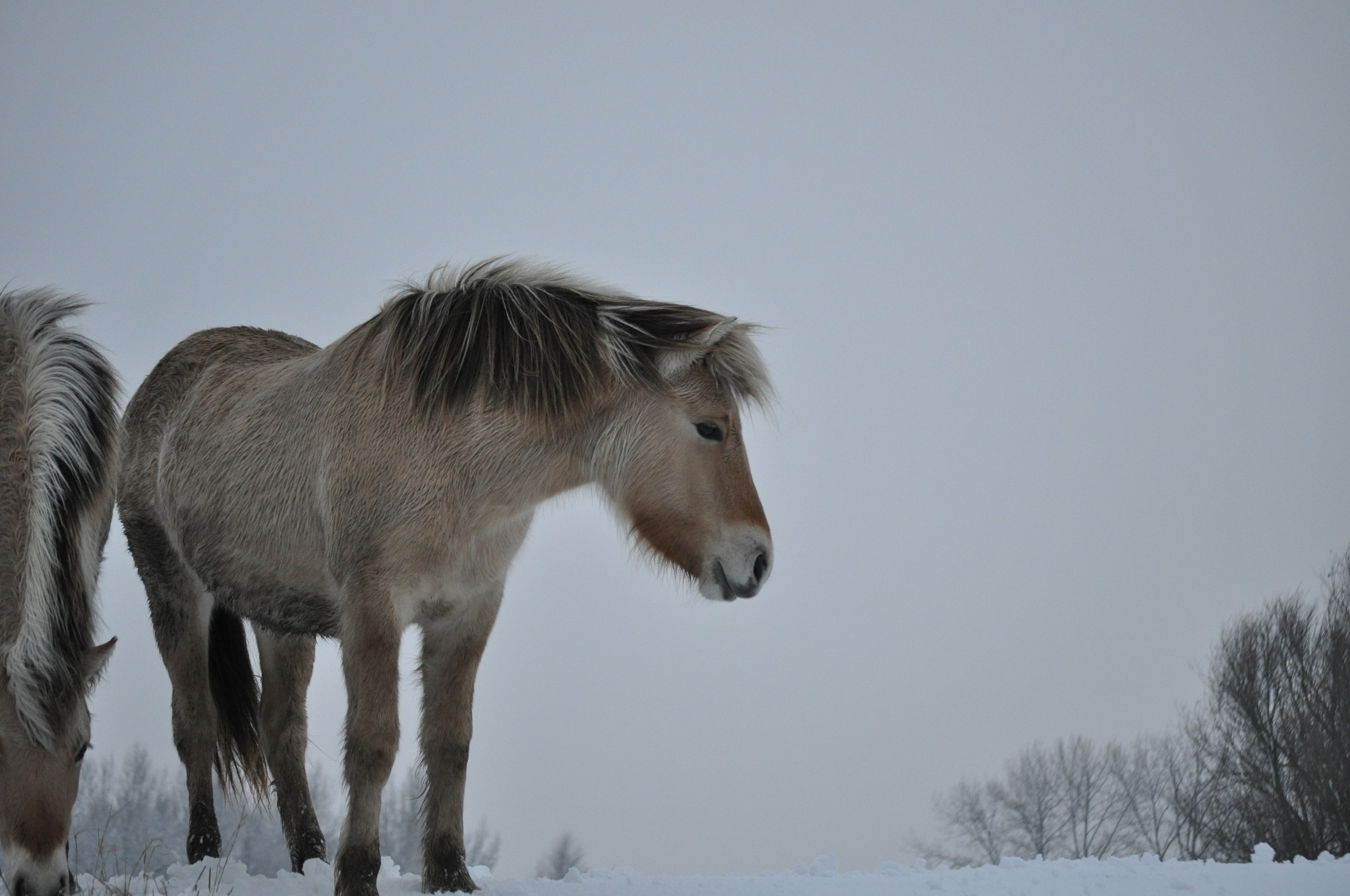 Wild fjord by Joanda Claessens