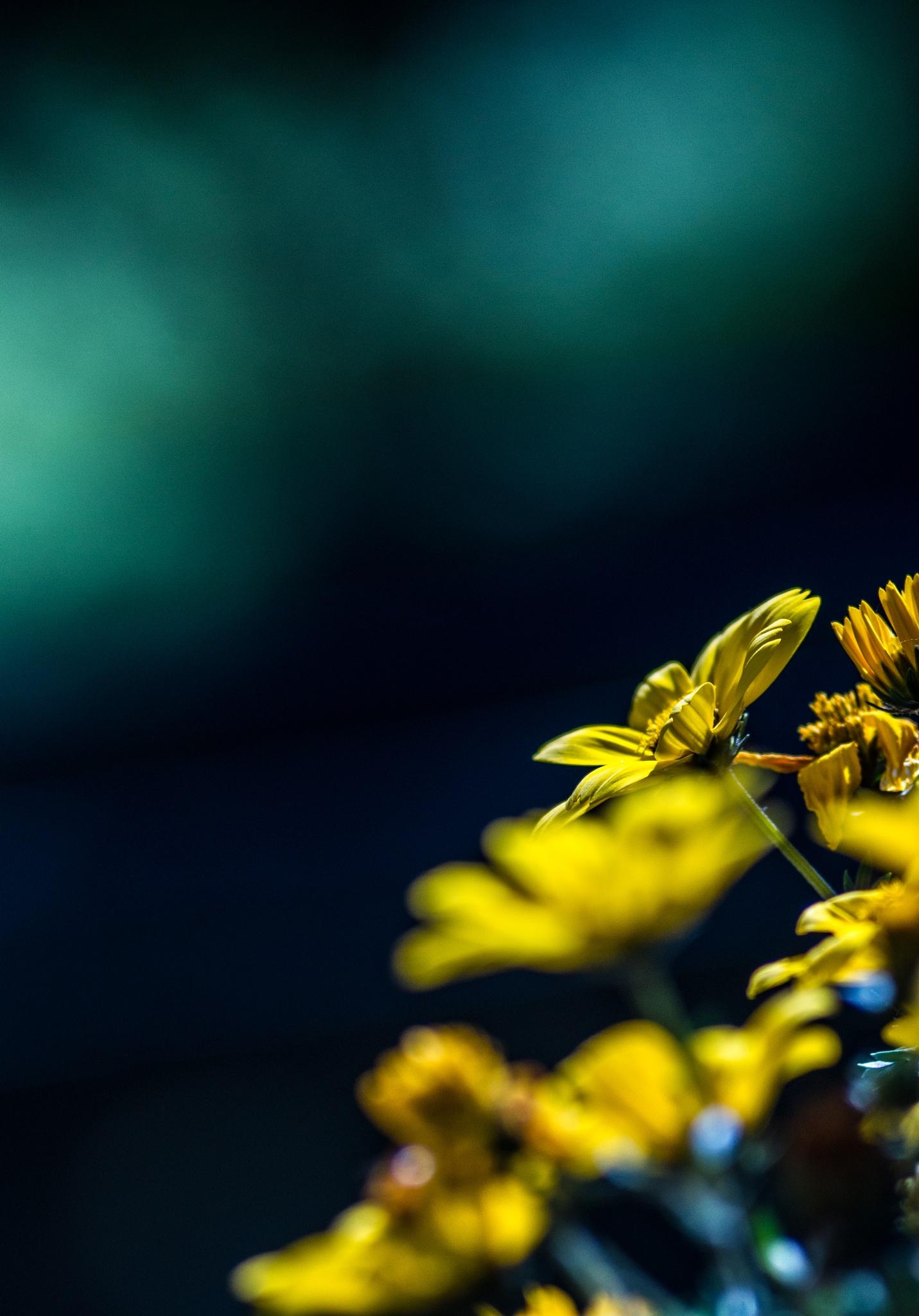 Yellow by Norbert Kamiński