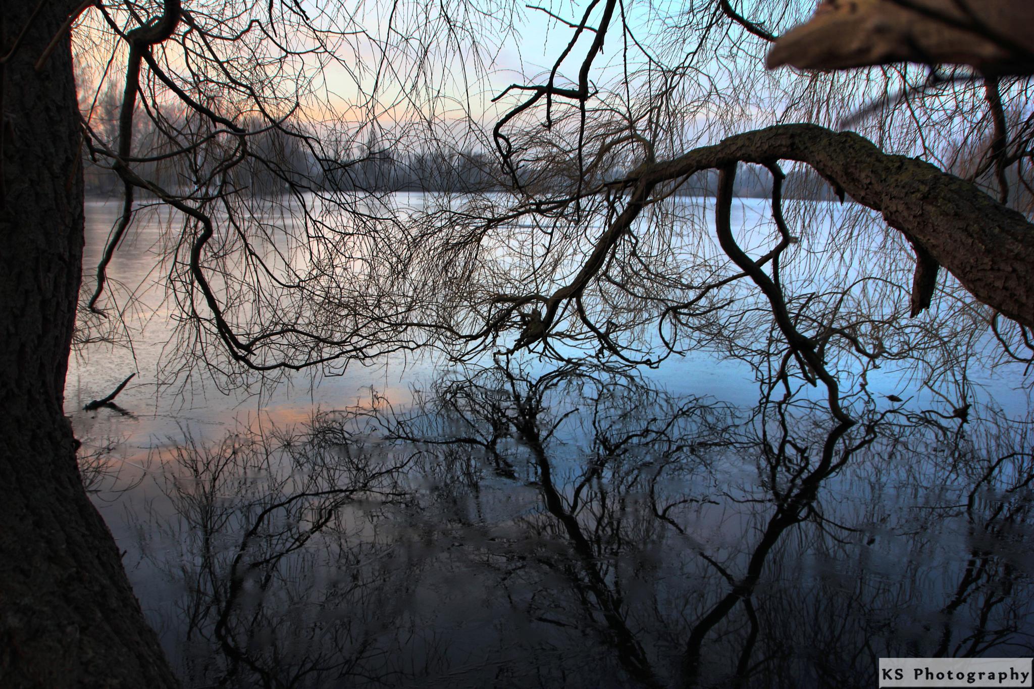 Reflection by Klaus Schenker