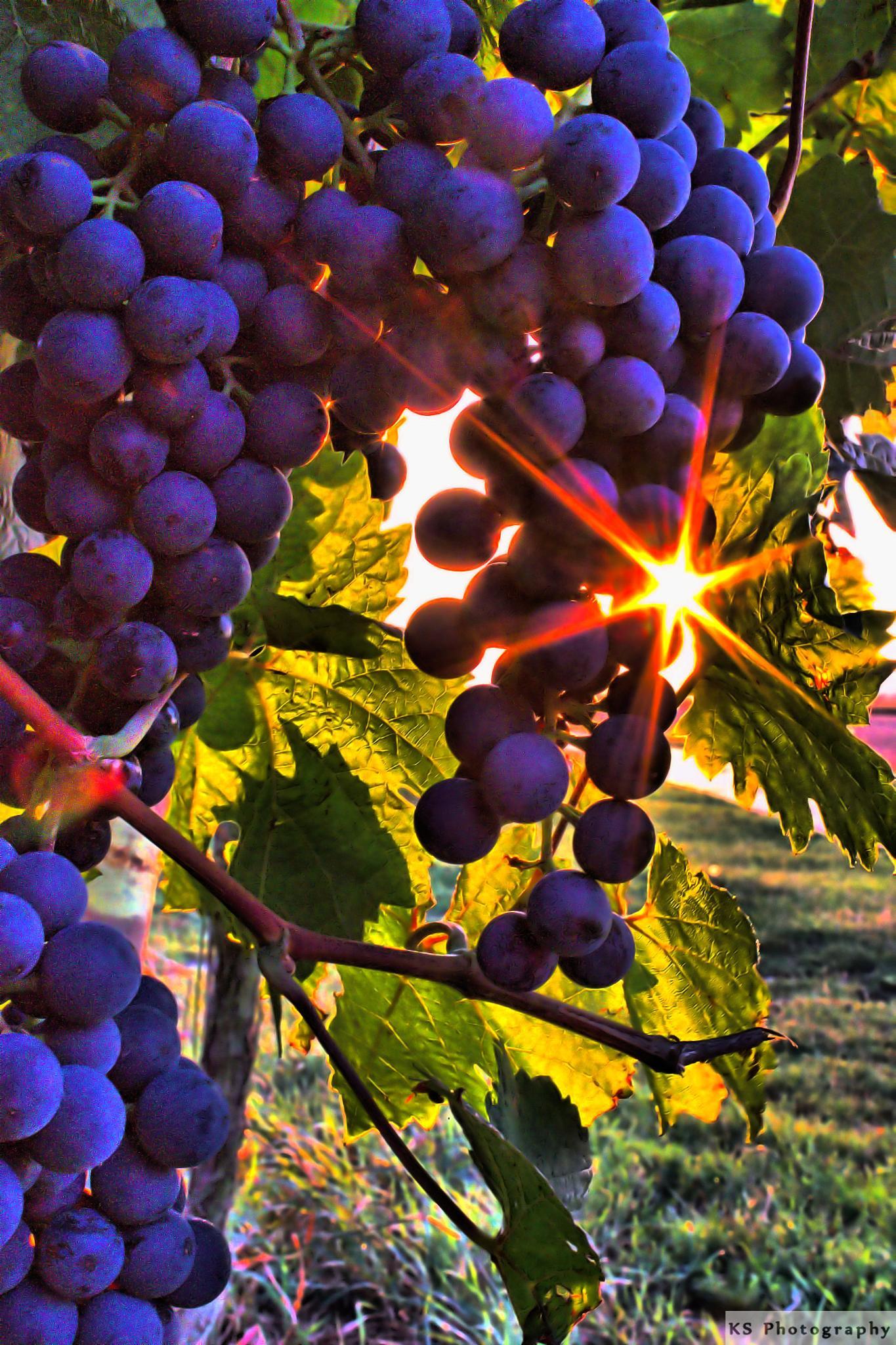 Grapes by Klaus Schenker