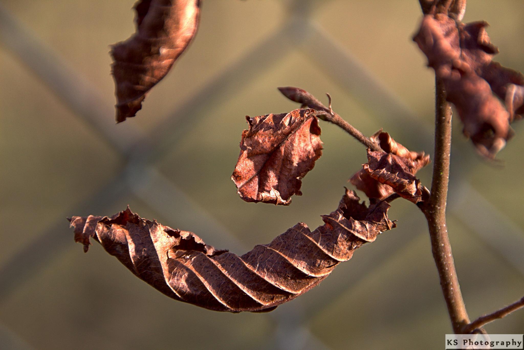 Autumn leaves by Klaus Schenker