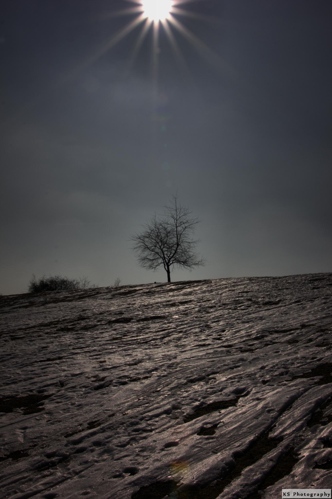 Cold winter day by Klaus Schenker