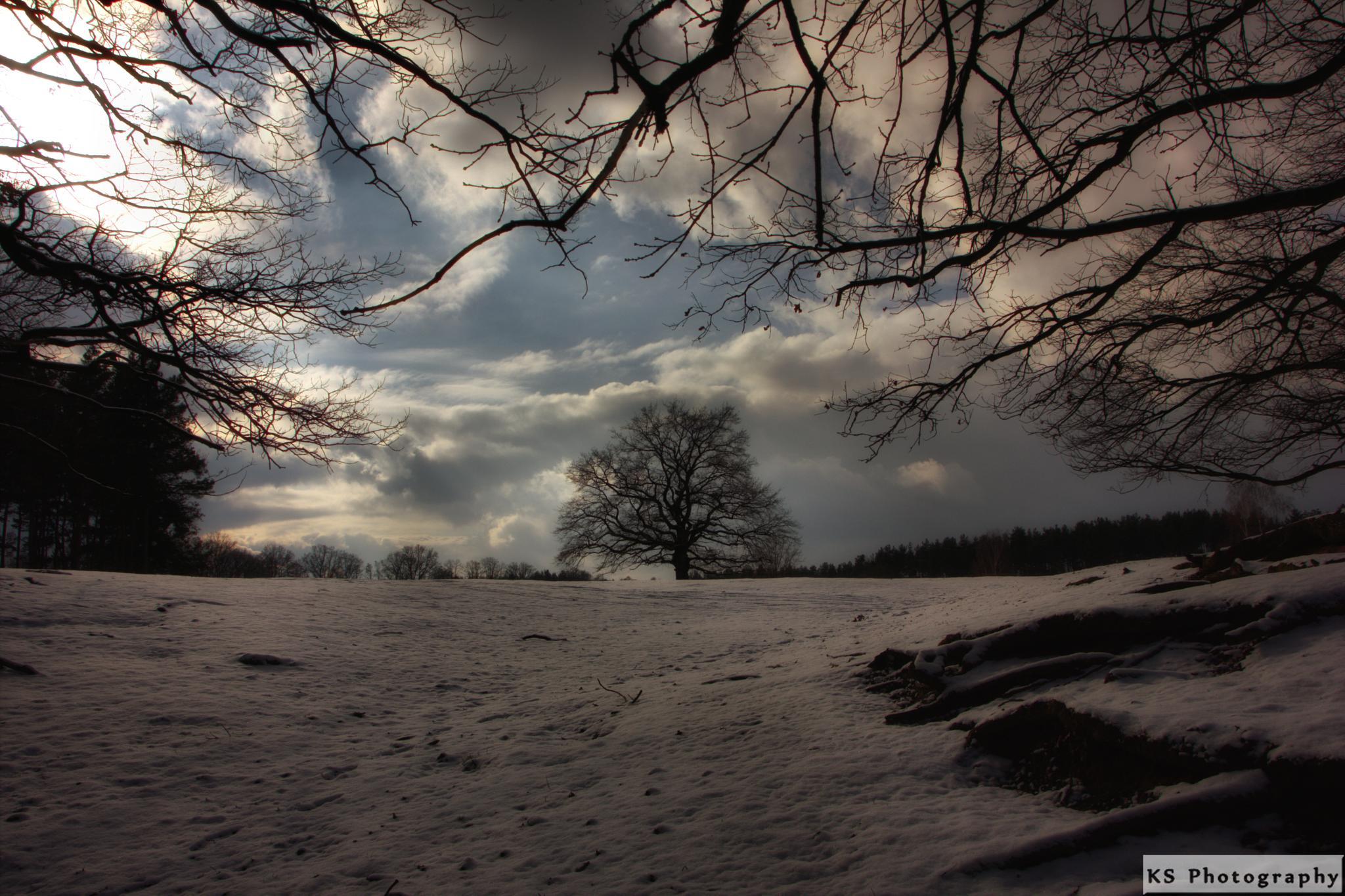 Winter by Klaus Schenker