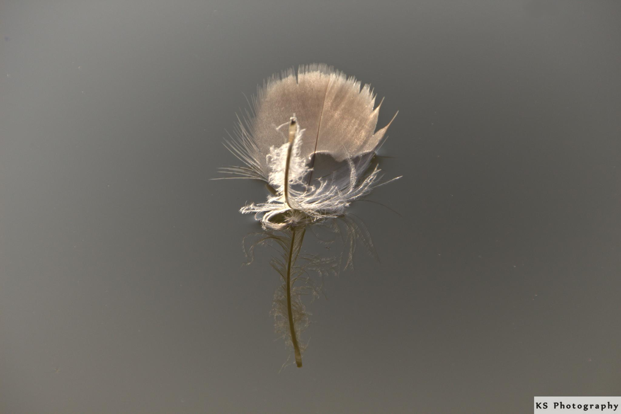 floating feather by Klaus Schenker