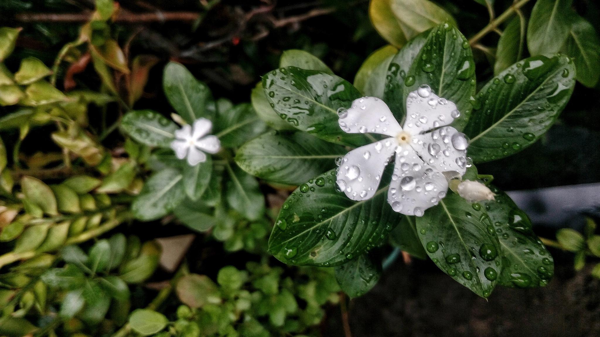 Bye Bye Monsoon by Ðevavrat Abhyankar