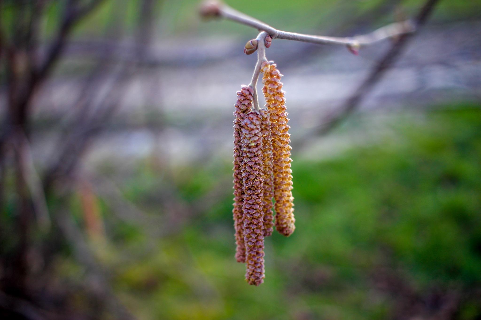 ...springtime buds by Adi Red
