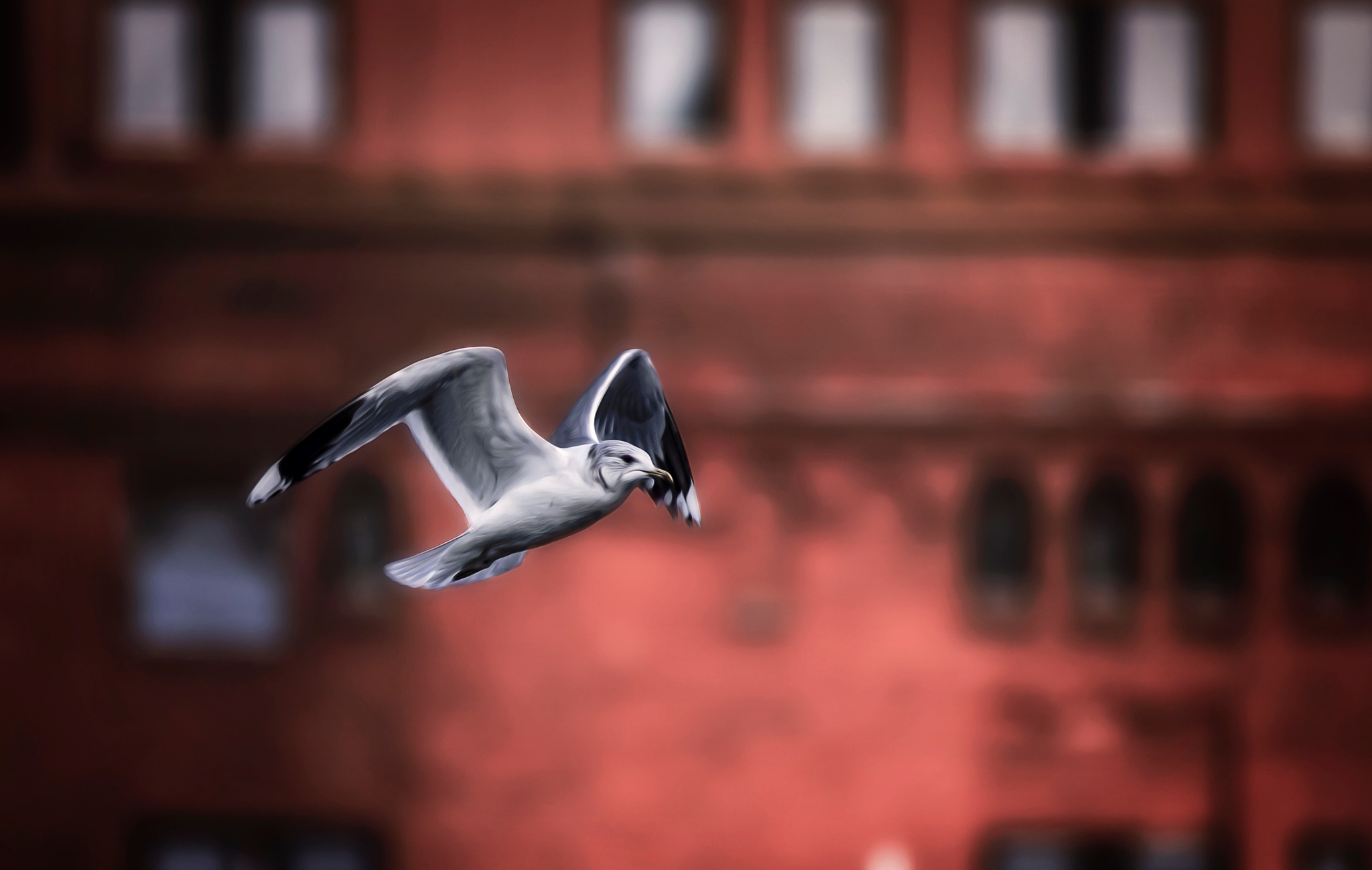 Seagull  by Mattias Borg