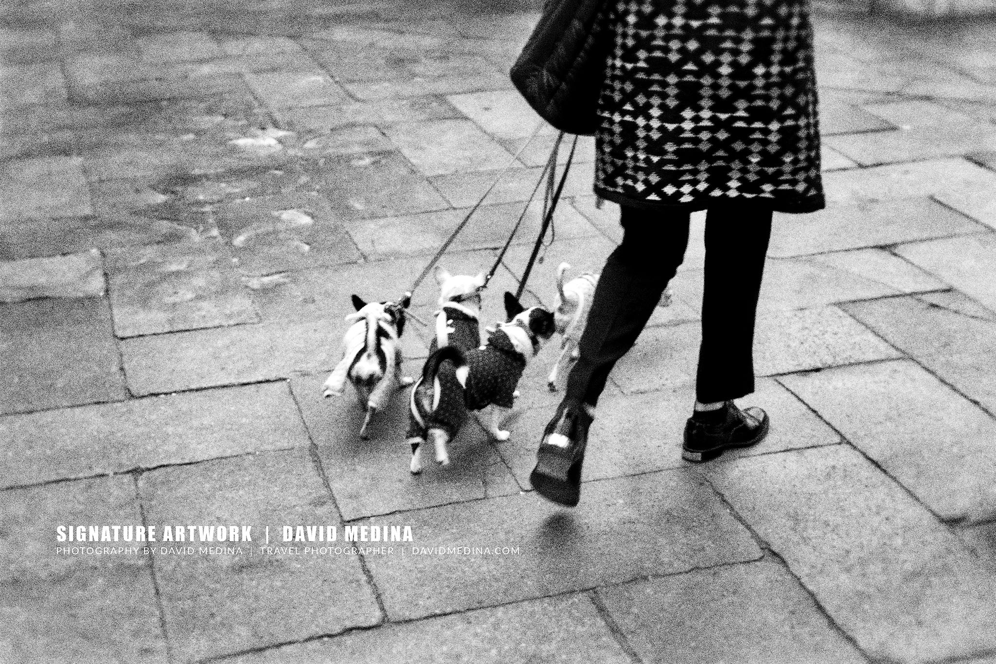 Walking the dogs by David Medina