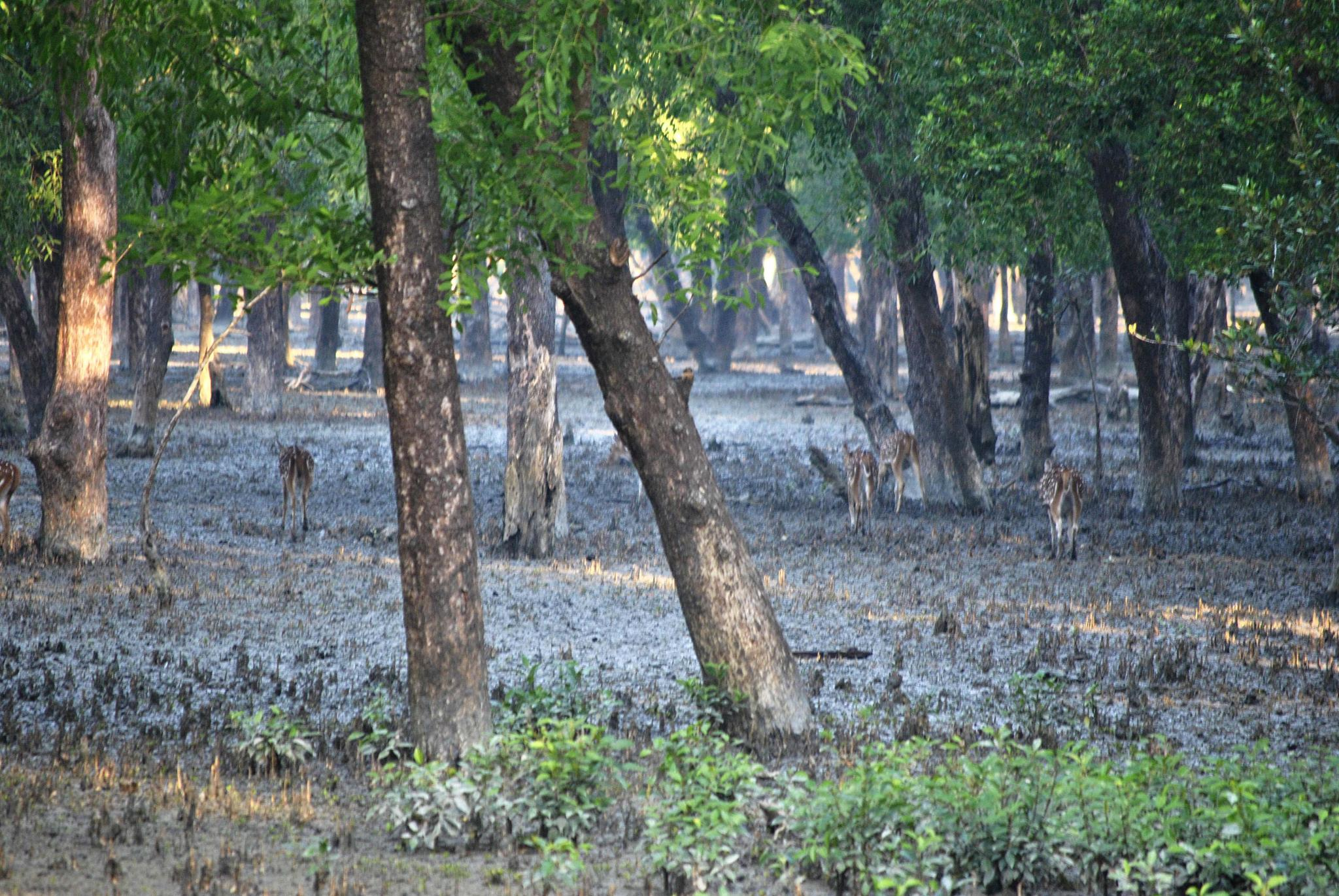 """Mangrove Forest """"Sundarban"""" by Jahidul Islam Palash"""