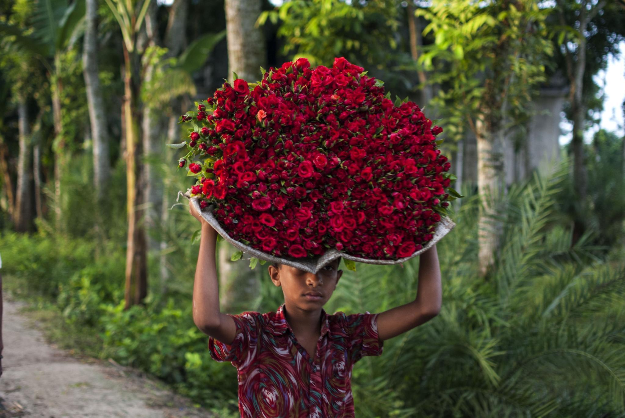 Flower Boy by Jahidul Islam Palash